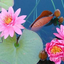 Charlotte Gray - Pink Water Lilies