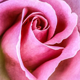 CarolLMiller Photography - Pretty in Pink