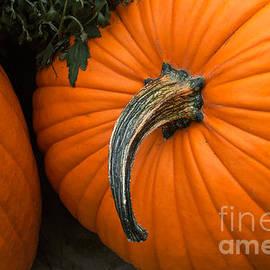Arlene Carmel - Pumpkins