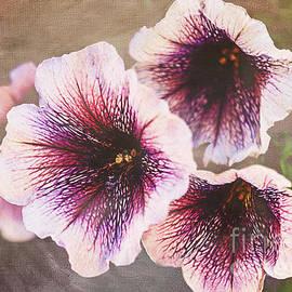 Janice Rae Pariza - Purple Petunias