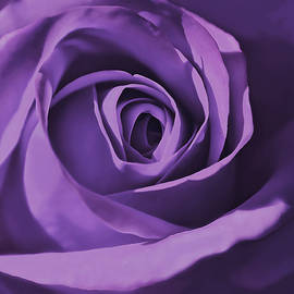 Jennie Marie Schell - Purple Rose Flower Mystery