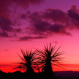 James Welch - Purple Sunset