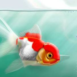 John Wills - Red Cap Goldfish