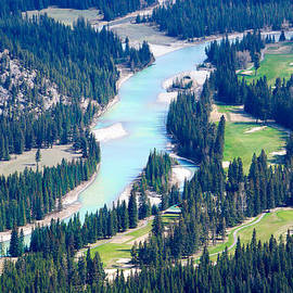 River surrounded by pine trees