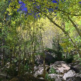 Allen Beatty - Rocky Mountain National Park 2