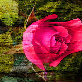 Judy Arbuckle - Rose on wood
