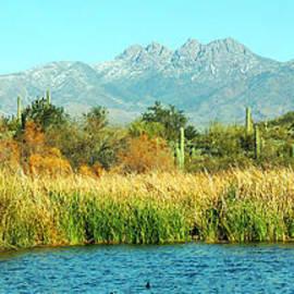Afrodita Ellerman - SAGUARO Lake AZ