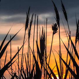 Constance Carlsen - Sea Grass