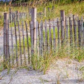 Dawna  Moore Photography - Sea Oats and Sand Fences