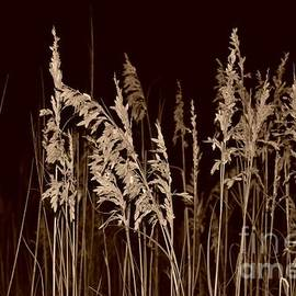 Bob Sample - Sea Oats In Sepia