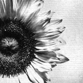 KJ DeWaal - Shadow of a Sunflower