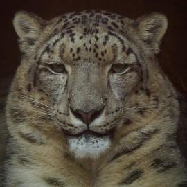 Ernie Echols - Snow Leopard Portrait