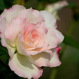 Living Color Photography Lorraine Lynch - Soft Pink
