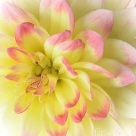 Kathleen Struckle - Softness