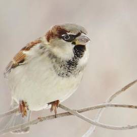 Lori Frisch - Sparrow In Pastels