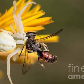 Jivko Nakev - Spider vs. Bee
