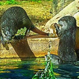 Miroslava Jurcik - Otters Splash