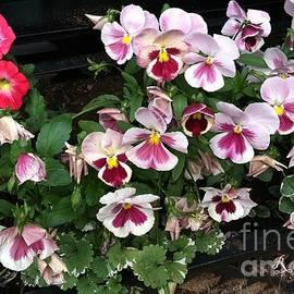 r mahlouji - spring flowers