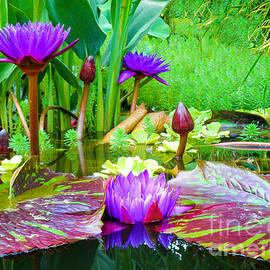 Viaina     - Summer Lily Pond