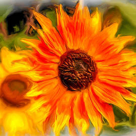 Dennis Bucklin - Sunflower