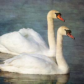Chris Smith - Swan