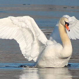 Lori Rossi - Swan