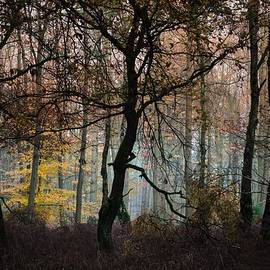 Nicole Frischlich - The Forest Run