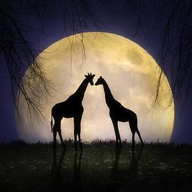 Jennifer Woodward - The Giraffes at Midnight