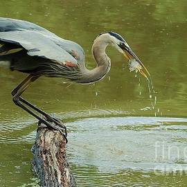 Joy Bradley - The Heron