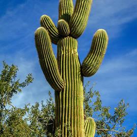 Robert Bales - The  Saguaro