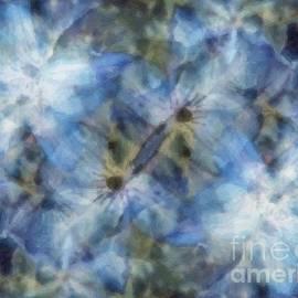 RC deWinter - Tissue Paper Blues