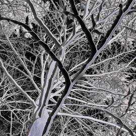 Pavel Jankasek - Tree