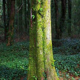 Carlos Caetano - Tree Trunk