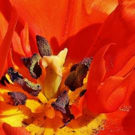 Bruce Bley - Tulip Abstract