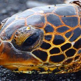 Patrick  Roberto - Turtle Eye