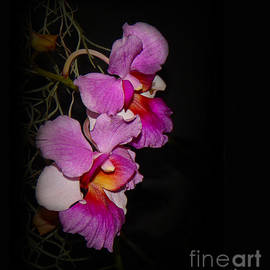 Judi Bagwell - Two Orchids