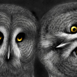 Miki Krenelka - Two Owls Looking