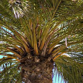 Ricky Barnard - Under The Palm