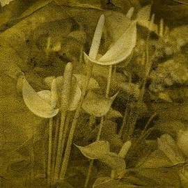 Richard Cummings - Vintage Calla Lilies