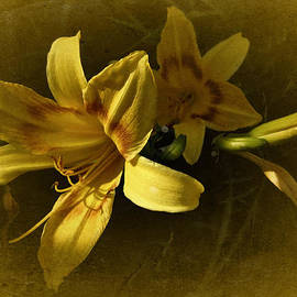 Richard Cummings - Vintage Yellow Lily