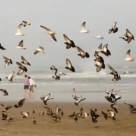 Michael Schwartzberg - Walking with Pigeons