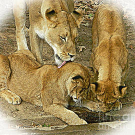 Emmy Marie Vickers - We Are Family - Lioness And Cubs 2