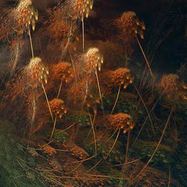 David Arment - Weeds