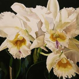 Alfred Ng - White Cattleya Orchids