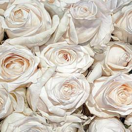 Thomas Darnell - White Cream Roses