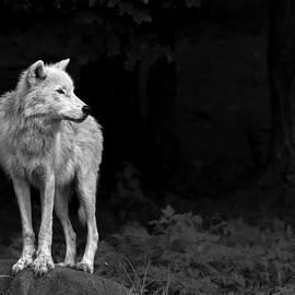 Jim Cumming - White Wolf