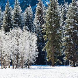 Dan Hartford - Winter Cottonwood