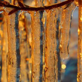 Dianne Cowen - Winter Gold