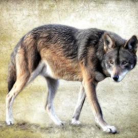 Athena Mckinzie - Wolf