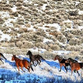 Maria Jansson - 10. Lockwood Mustangs